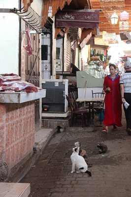 Beware the market cats of Fes - they will kill you for that piece of meat
